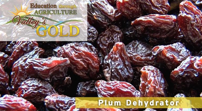 Valley's Gold Season 2: Education Through Agriculture: Prunes