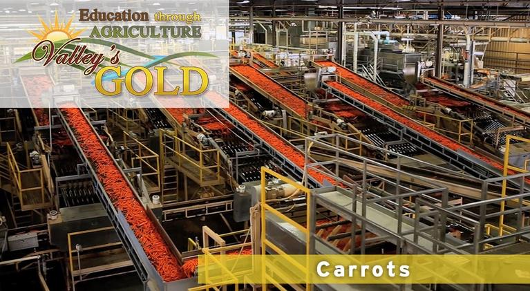 Valley's Gold Season 3: Education through Agriculture: Carrots