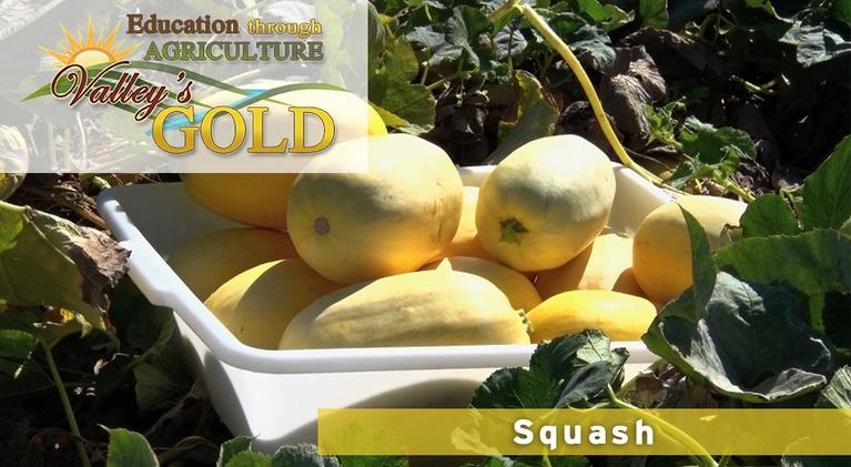 Valley's Gold Season 3: Education through Agriculture: Squash