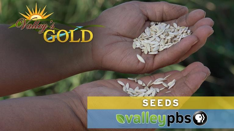 Valley's Gold Season 4: Valley's Gold: Seeds