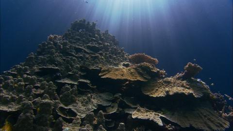 NOVA -- Can Super Corals Save Reefs?