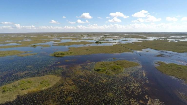 Battleground Everglades: Glades Warriors trailer