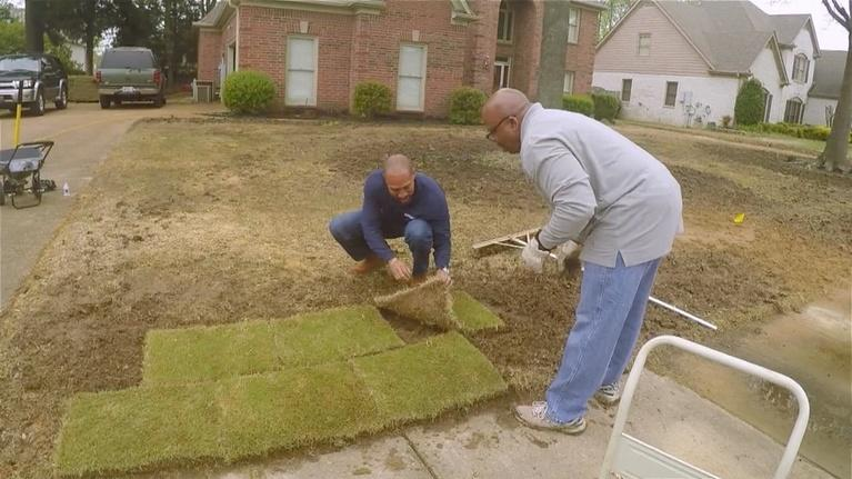 The Family Plot: Gardening Terms, Grapes, Sod, & more