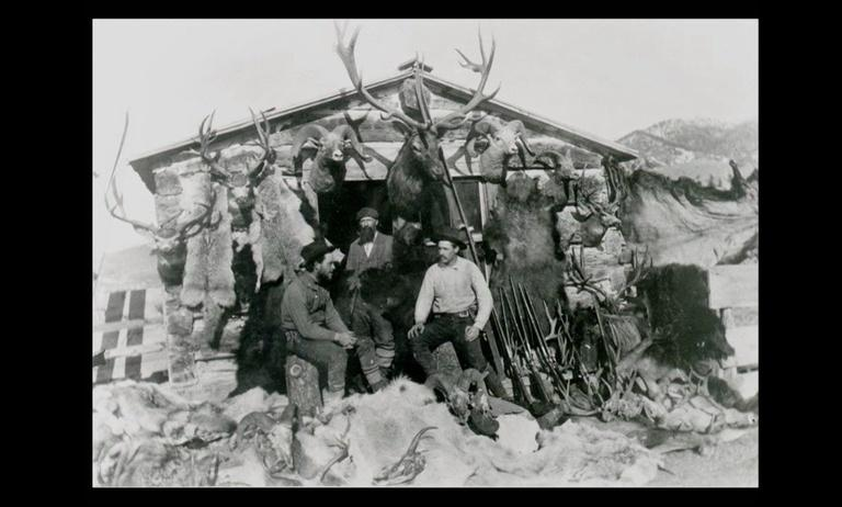 Back From The Brink: Montana's Wildlife Legacy Part 1