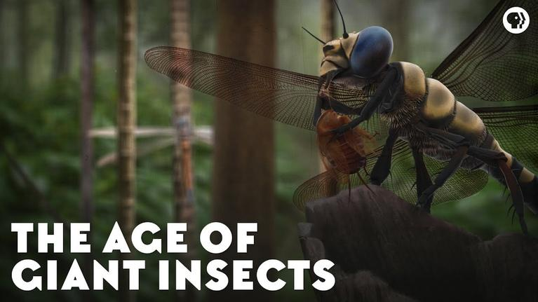 Eons: The Age of Giant Insects
