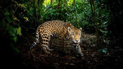 Nature -- Super Cats: A NATURE Miniseries