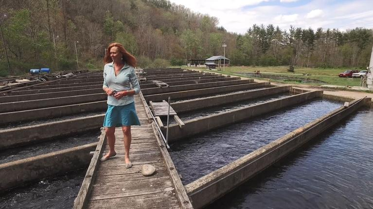 Climate Stories, NC: Sally Eason: Trout Farmer