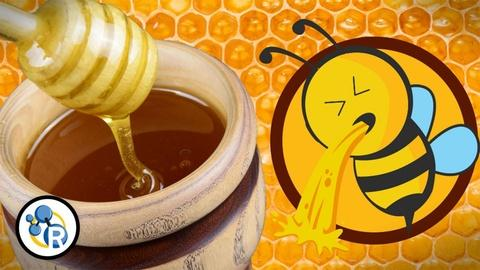 Reactions -- Did You Know Honey is Really Bee Puke?