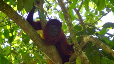 Meeting Suriname's Jungle Inhabitants | Digital Extra