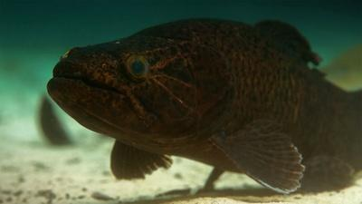 Rivers of Life | Meet the New Cichlid Family