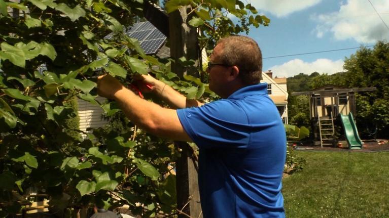 Working Class: Build & Grow Green
