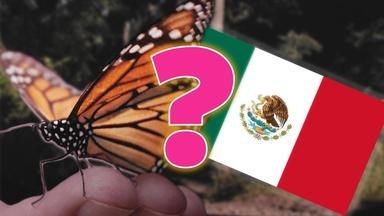The Big Lie about Monarch Butterflies