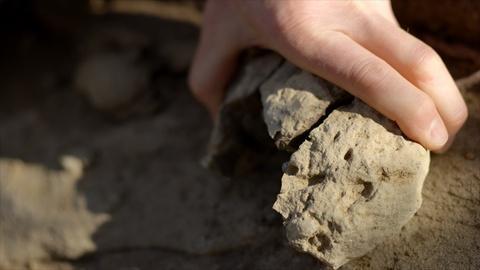 NOVA -- Paleontologists Discover New Mammal Fossils Hidden in Rocks
