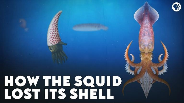 Eons: How the Squid Lost Its Shell