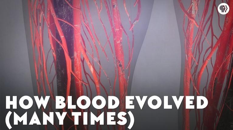 Eons: How Blood Evolved (Many Times)