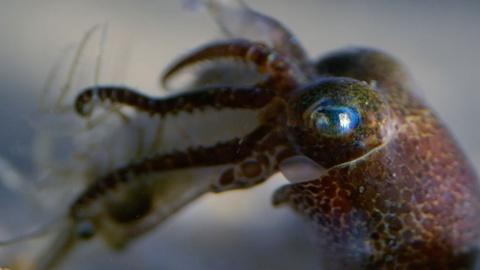Baby Cephalopods' First Moments