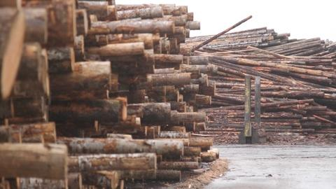 Can Oregon's timber Industry make a comeback?