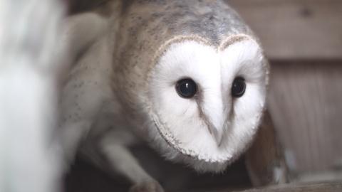 Nature -- The Orphan Owl | Backyard Nature