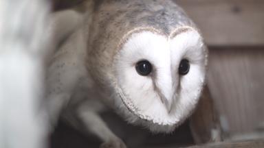 The Orphan Owl | Backyard Nature