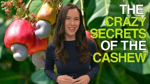 How Does It Grow -- The Crazy Secrets of the Cashew