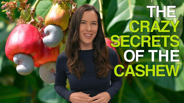 How Does It Grow: The Crazy Secrets of the Cashew