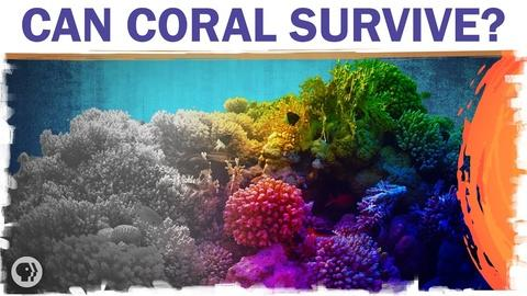 Hot Mess -- Coral Reefs Are Dying. But They Don't Have To.