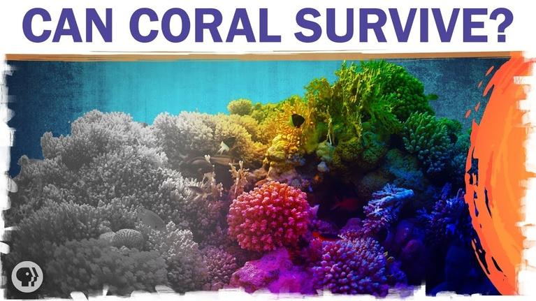 Hot Mess: Coral Reefs Are Dying. But They Don't Have To.