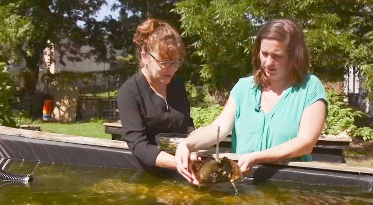 KLRN SciTech Now: Nov. 21, 2019 | Raising crabs sustainably