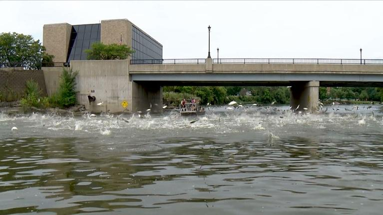 Great Lakes Now: Asian Carp and the Great Lakes
