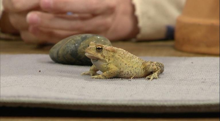 The Family Plot: Frogs & Toads, and Songbirds as Pests