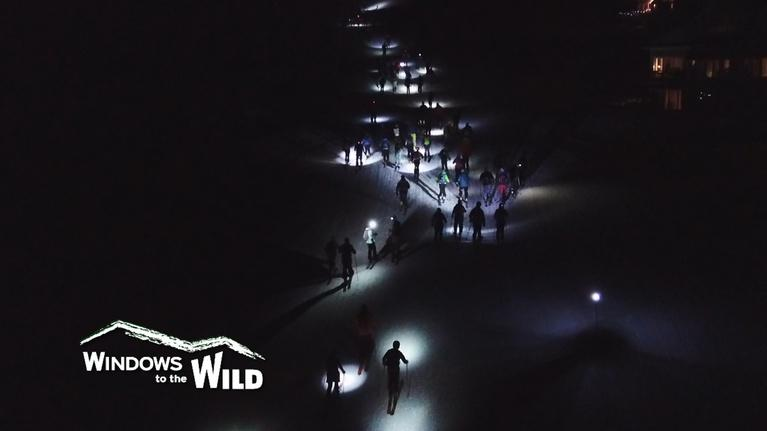 Windows to the Wild: Friday Night Lights (Preview)