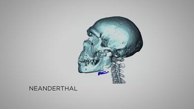 Neanderthal Vocalization