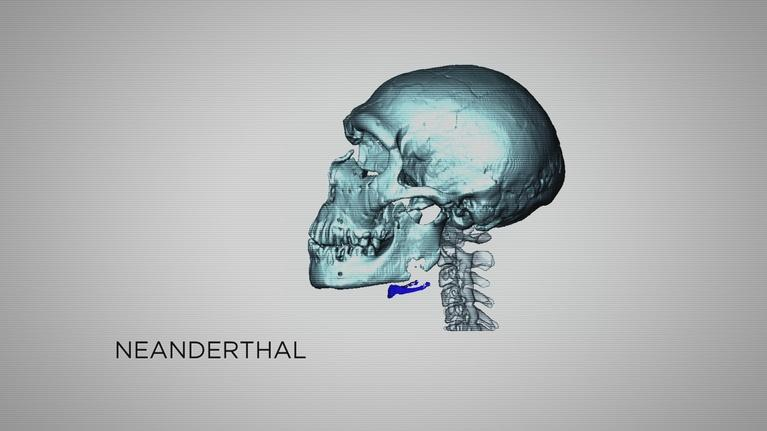 Neanderthal: Neanderthal Vocalization