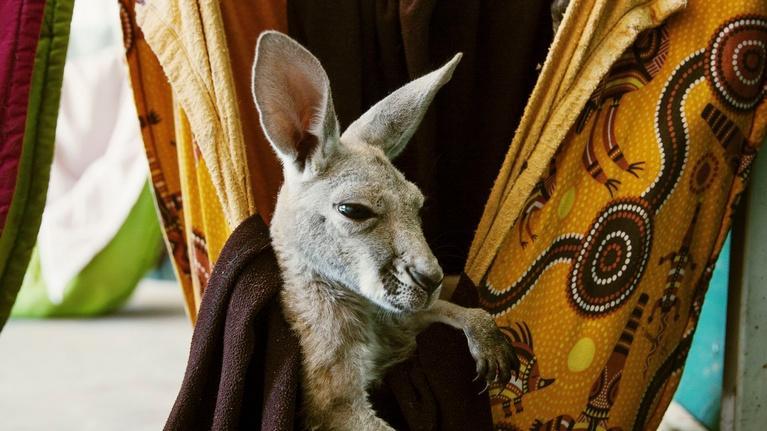 Outback: Kangaroo School