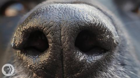 Deep Look -- How Your Dog's Nose Knows So Much