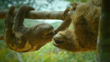 Spy Sloth has an Admirer