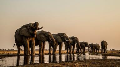 Okavango: River of Dreams - Series Preview