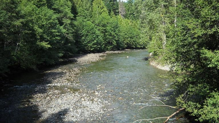 Crosscut Now: February 21, 2020 - Proposed BC Mine Threatens Skagit Salmon