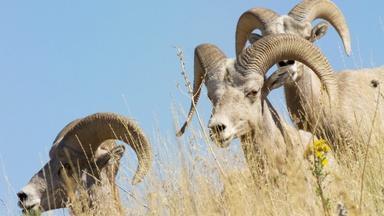 Running With The Herd: A NATURE Short Film - Sneak Peek