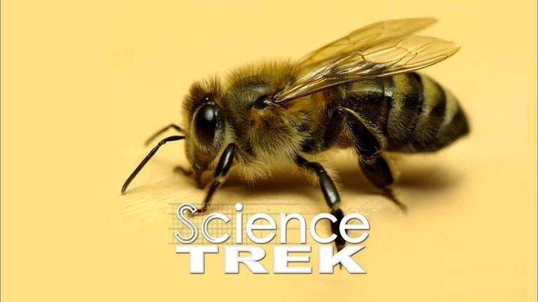 Science Trek: Bees: What's the Buzz About Bees?