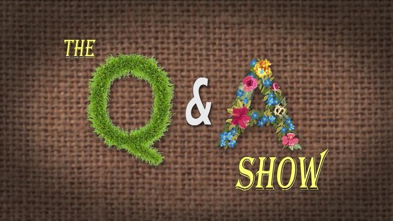 The Family Plot: Q & A Show