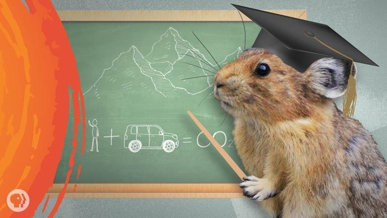 Hot Mess: What the Cutest Animal Can Teach Us About Saving Ourselves