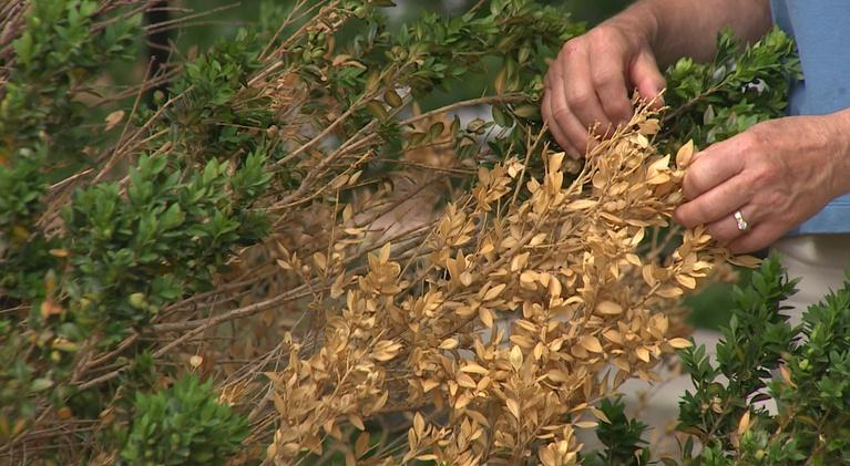 Backyard Farmer: Backyard Farmer: Bagging or Mulching