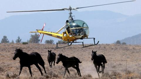 S1 E4: Horses: Wild, But Not Free
