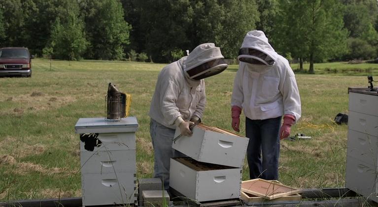 The Family Plot: Beekeeping Basics & Wildflowers