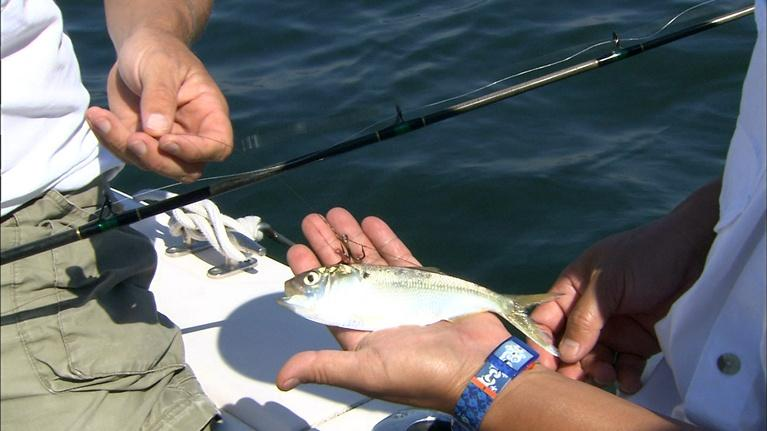 Carolina Outdoor Journal: Gear Time: Our anglers discuss how they rigged up