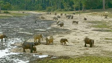 Village of the Elephants