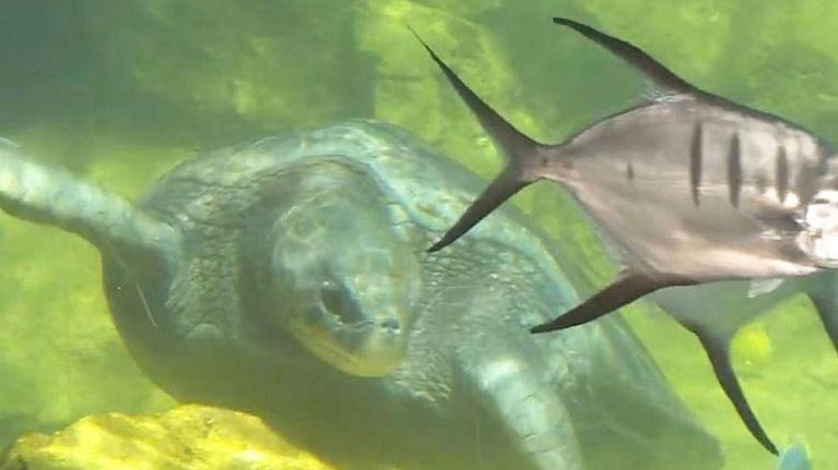 KLRN SciTech Now: Sept. 12, 2019 | Turtle Reef Aquarium