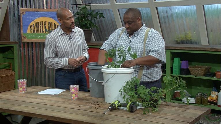 The Family Plot: Bucket Gardening & Herbs