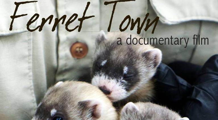 Wyoming PBS Specials: Ferret Town